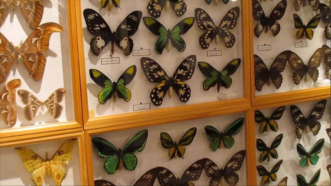 Butterfly Museum of Bhimtal